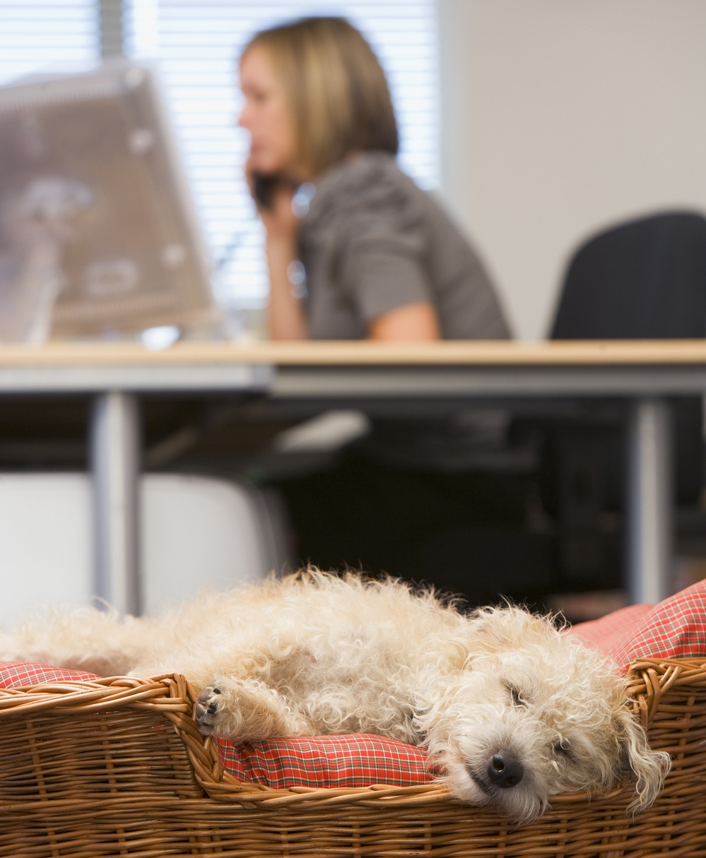 Hund im Büro © Monkey Business_Fotolia
